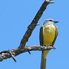 Blue Skies & Yellow Birds