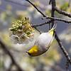 Equilibrist Bird / Циркач