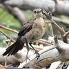 Last Bird Standing