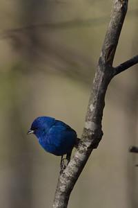 Very Blue