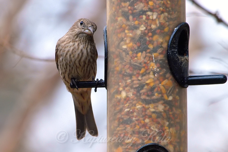 The Finch Feeder Lives Up To Its Name