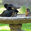 Bird Bath Boot Camp, Guess Who is the Drill Sergeant?