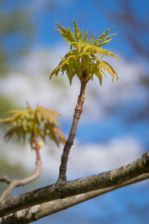 IMAGE: https://photos.smugmug.com/Birds/i-MPV47m3/0/XL/Tree%2003312017-7001-3-XL.jpg