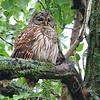Pretty Mama Owl