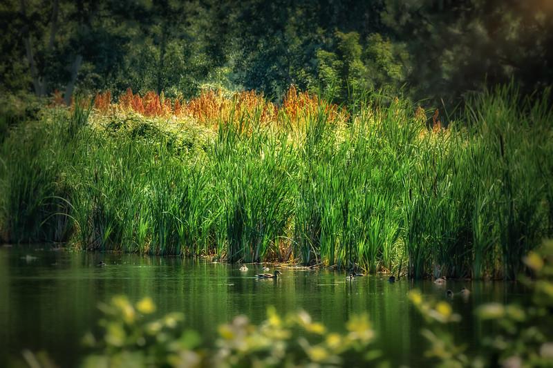 Golden Green Summer