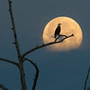 Eagle Moonset