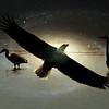 Birds in the Cosmos