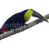 Ramphastos ambiguus swainsonii – Chestnut mandibled toucan 4
