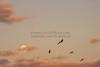 BonitaBay Ibis & Moon_6256_1-9-2020_DonnaLovelyPhotos com_