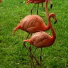 Flamingo Line Dance