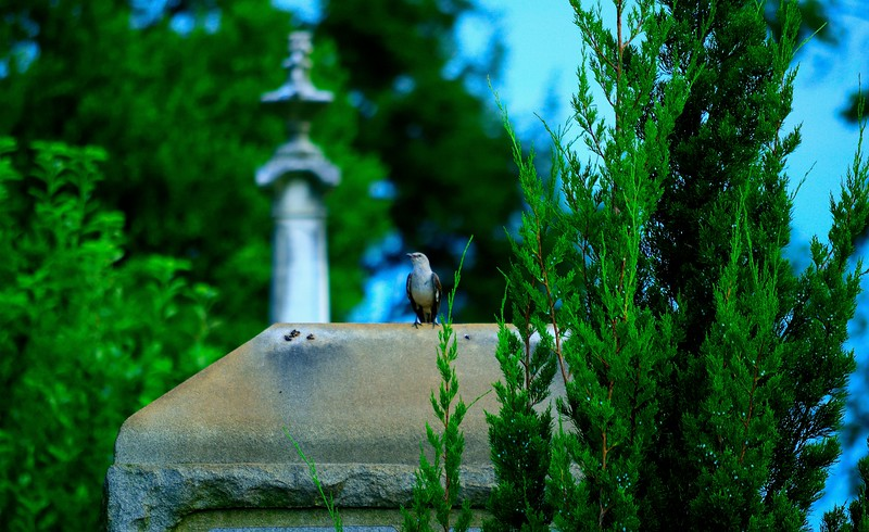 Historic Oakland Cemetery