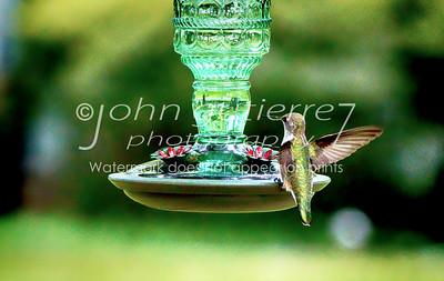 Hummingbird-04
