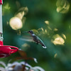 bobK-HummingBird-LB29