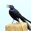 Opinionated Bird View 2