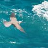 Flying Free Noddy