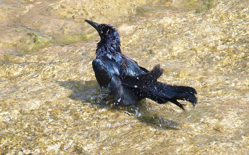 Splishy Splashy