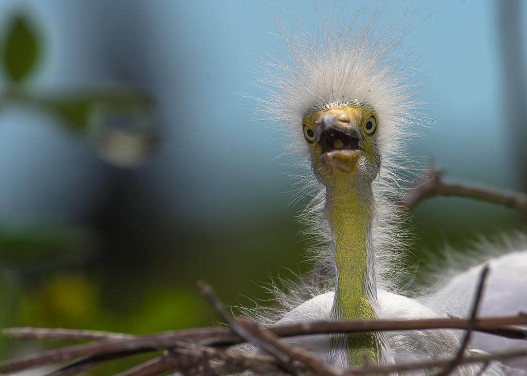 IMAGE: http://jasonwalker.smugmug.com/Birds/i-QLrs9ND/0/X2/DSC_8206-X2.jpg