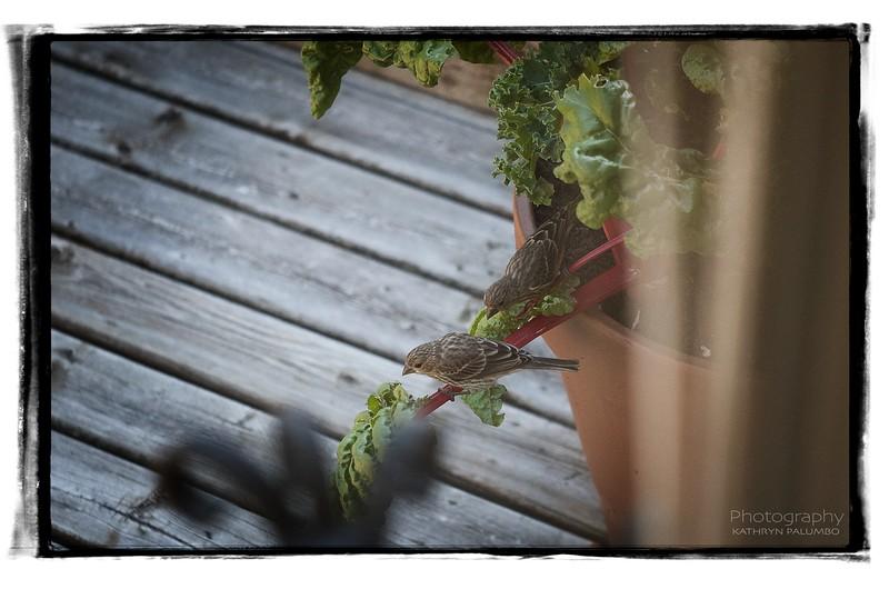 Birds as Garden Pest Control