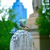 Oakland Cemetery.... Atlanta