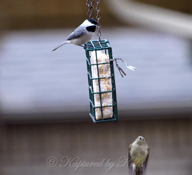 New Bird!