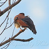 Kestrel Yoga Position 3