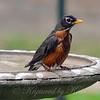Told You It Was My Bird Bath