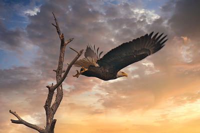 Eagle Blackwater 1560