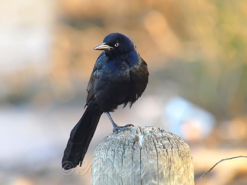 My Birding Buddy