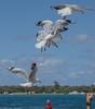 Seagulls 17