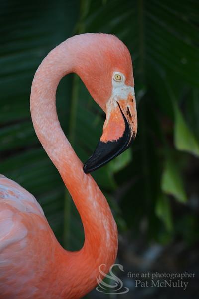 Pink Flamingo Bird Picture