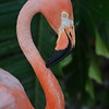 Pink Flamingo Bird Picture