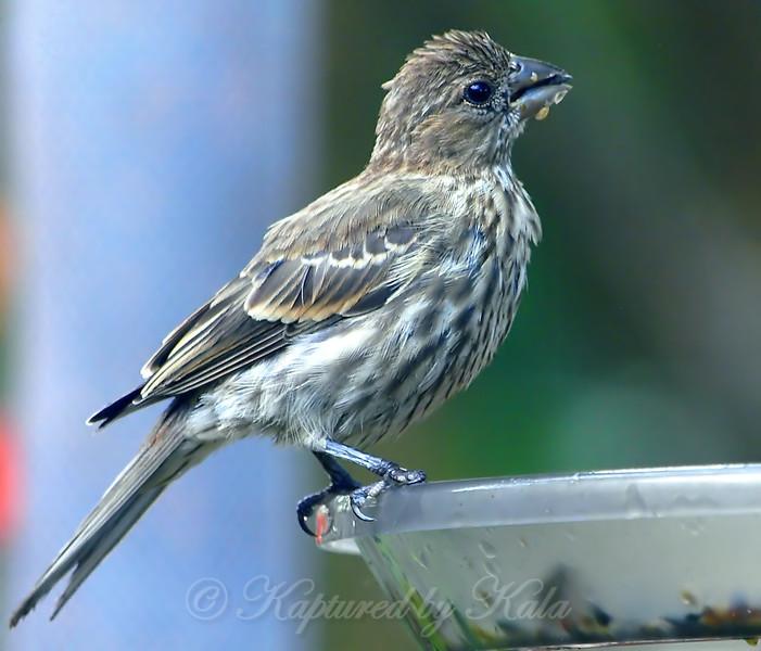 Yum!  Wet Bird Seed
