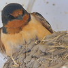 Mama On Her Nest