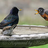 Get Out Of My Birdbath!