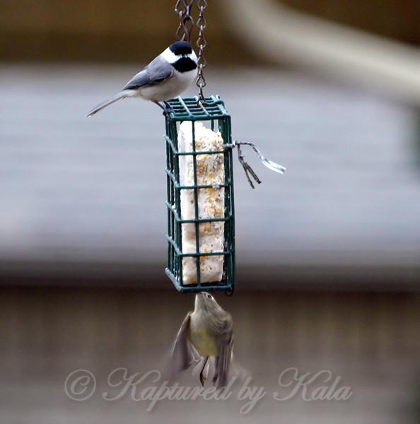 New Bird Gots Skillz!