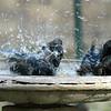 One, Two, Three...Everybody Splash!!