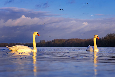 Bird convention at sunset...
