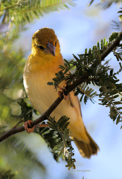 IMG_5057 Africa Rocks Yellow Bird 12.30.2018 70-200 lens_Signed.jpg