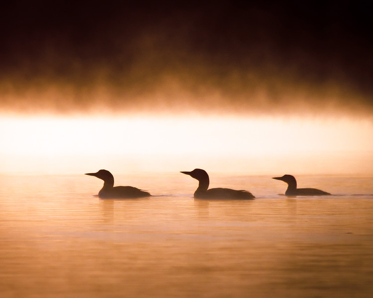 Loon Sunrise