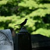 Oakland Cemetery,.... Atlanta