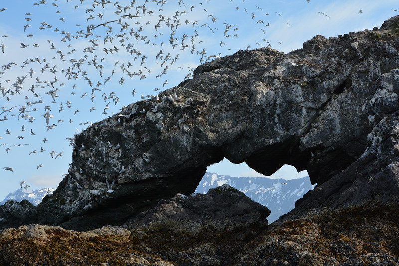 Birds and Arch at Gull Island, Kachemak Bay, Alaska