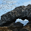 Birds and Arch at Gull Island, Kachemak Bay, Alaska