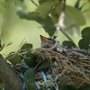 Two Babies In The Nest