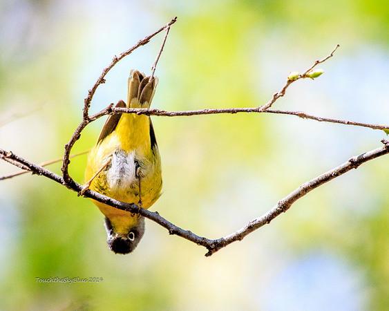 Avian Images