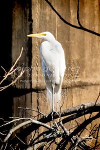 Egret under RR tretsle-1