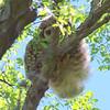 Tree Fluff