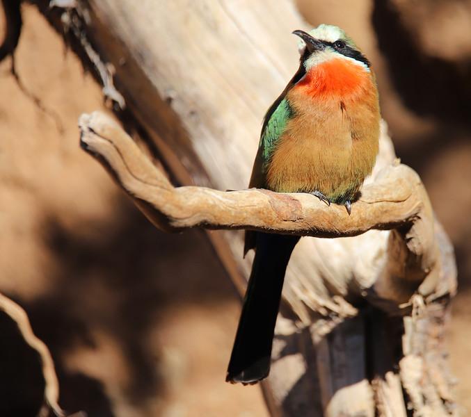 IMG_3485 Africa Rocks Bird 11.2018.jpg
