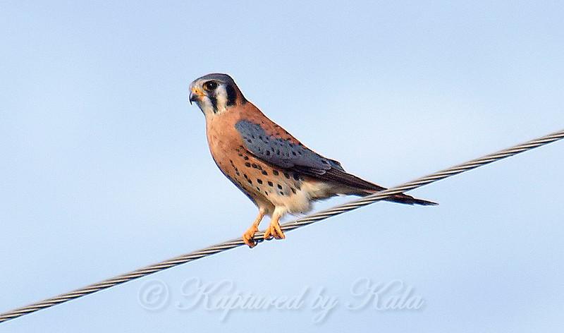 Such A Handsome Bird