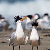 Tern attitude