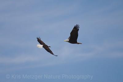 """Freedom Flight"""